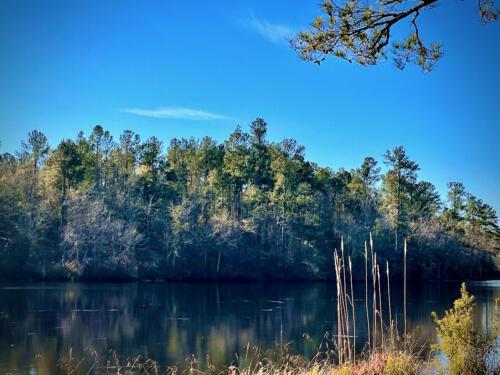 White Pond Road Pond