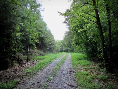 Holstein Road Timber