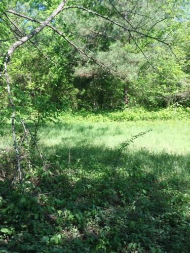Sewee Creek North